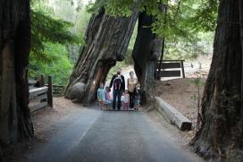 Shrine Tree